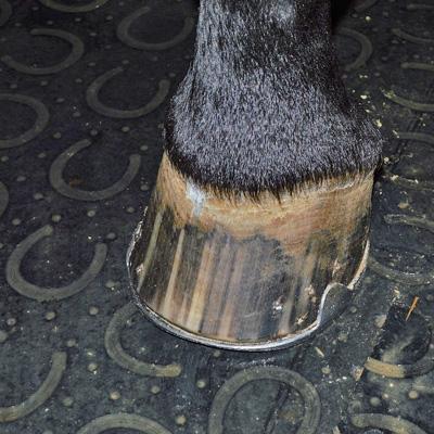 Специальная резина в конюшне